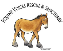 Equine Voices Rescue & Sanctuary Logo